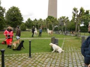 DSCN5572_WDR daheim und unterwegs Thema Tiere helfen Menschen - TherapieLamas Rettungshunde