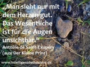 DSC01703_Man kann überall ein Herz finden_Prachtlamas - Kopie_fb - Kopie