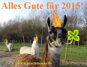 Neujahresgrüße 2015, Foto: Prachtlamas
