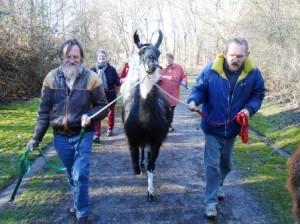 Eine Wohngruppe aus Duisburg bei einer tiergestützte Therapie-Stunde im Januar (Lamatherapie), Foto: Prachtlamas