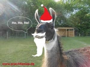Das Team von Prachtlamas wünscht Ihnen allen Frohe Weihnachten und einen Guten Rutsch ins Neue Jahr!