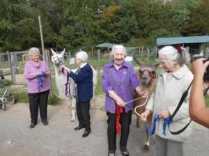 Tiergestützte Therapie für Essener Senioren in Gelsenkirchen, NRW, Foto: Prachtlamas