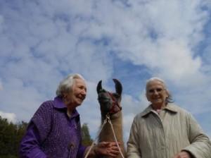 Tiergestützte Intervention mit Lamas im Gesundheitspark Nienhausen, Foto: Prachtlamas