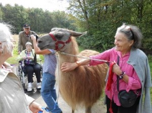Lamatherapie im Ruhrgebiet, Foto: Prachtlamas