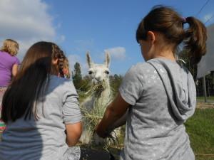 Ferien Sommer 2018 - Programm für Kinder ab 7 Jahren mit Tieren, mit Lamas im Ruhrgebiet