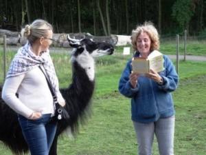 Lesung mit Lamas: Beate Pracht liest aus ihrem ersten Buch