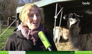 Borio TV: Portrait über Beate Pracht - Wunderwerk Herz & Prachtlamas, Lamatherapie