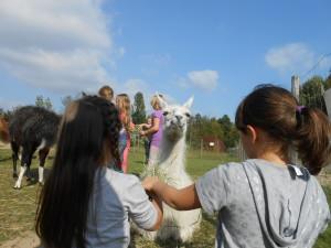Kinder erleben Tiere, Lamas im Ruhrgebiet auch zu Ostern