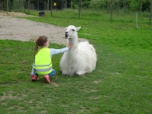 Achtsame Begegnung zwischen Lama und Kind, Ferienprogramm im Sommer 2016 NRW