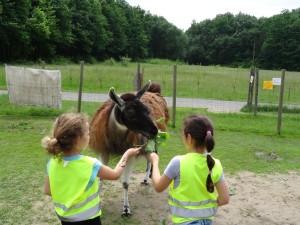 Tiererlebnisse wie auf dem Bauernhof in den Sommerferien für Kinder im Ruhrgebiet, NRW, Prachtlamas