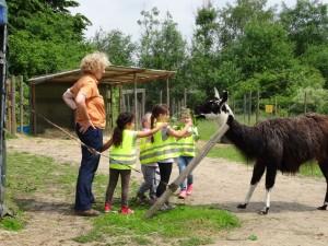 Erlebnispädagogisches Tiererlebnis mit Lamas in Gelsenkirchen, Copyright Prachtlamas