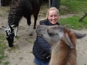 Urlaub wie auf dem Bauernhof mit Lamas mitten im Ruhrgebiet. Lama Caruso ganz kuschelig.