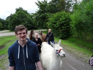 Ausflugsziel für Familien Lamas im Ruhrpott NRW