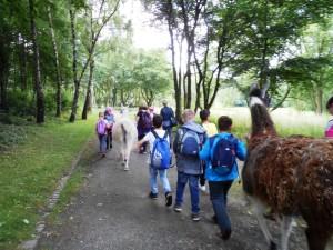 Spannende Abenteuer mit Tieren, mit Lamas, für Kinder in den Ferien im Ruhrgebiet, NRW