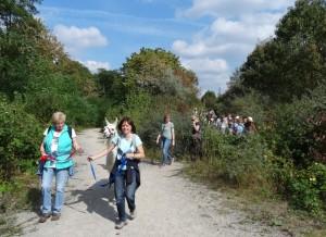 Mit Lamas unterwegs bei einer XL-Lamawanderung in NRW, Ruhrgebiet - im Goldenen Oktober, Foto: Prachtlamas