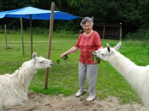 Bei der Lesung mit Lamas ist Mitmachen angesagt: Wer möchte, kann die fünf Lamas auch hautnah kennenlernen. So wird die Lesung zum unvergesslichen Erlebnis.