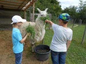 """""""Ferientag mit Lamas"""" finden wieder im Ruhegbiet für Kinder statt, Foto: Prachtlamas"""