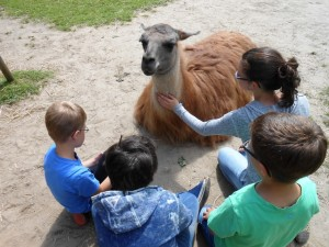 Ferientag mit Lamas für Ruhrgebiets-Kinder in den Herbstferien, Foto: Prachtlamas