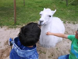 Ein Ferientag mit Lamas für Kinder, im Ruhrgebebiet, Foto: Prachtlamas