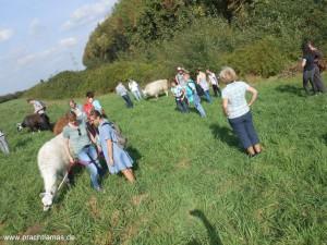 Lamawanderung auf die Anden des Ruhrgebiets