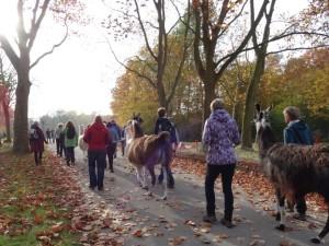 (Herbstfoto) Achtsamkeits-Lama-Wanderung in der Parklandschaft von Gelsenkirchen in NRW