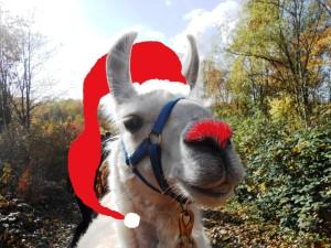 Weihnachtsgrüße von den Prachtlamas 2016: Dancer, the rednose Lama