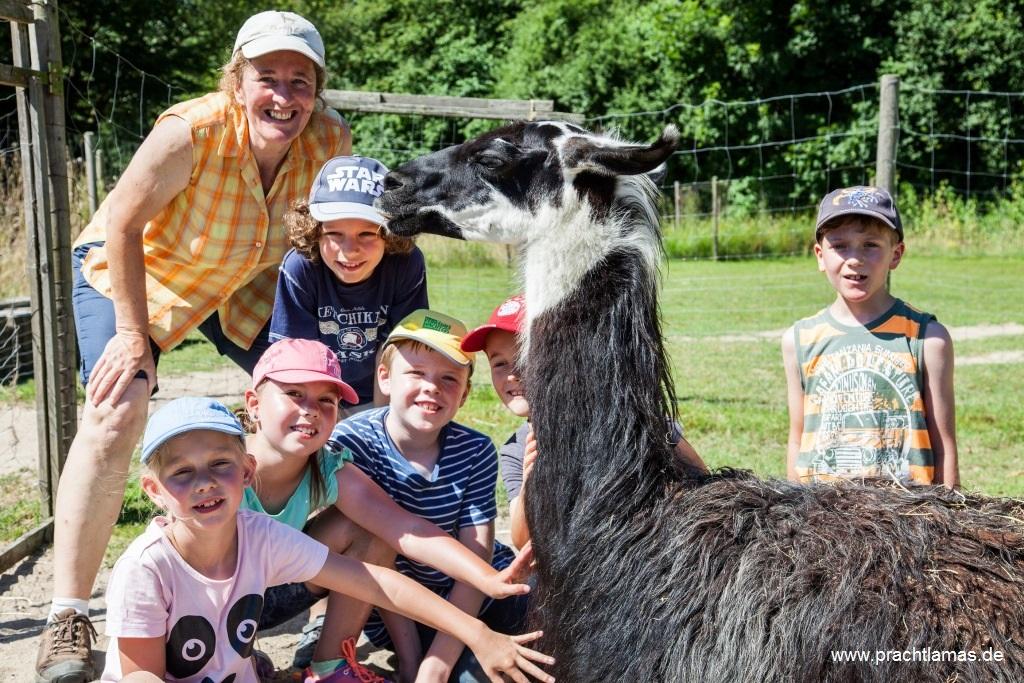 Sommer Ferien für Kinder mit Lamas im Ruhrgebiet Nordrhein Westfalen mit Prachtlamas im Juli August, Foto Ronja Donsbach