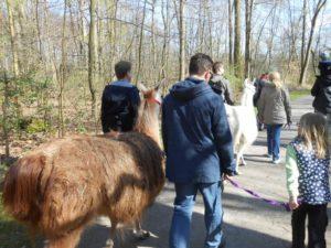 Wanderung mit Lamas von Gelsenkirchen nach Essen, Ruhrgebiet