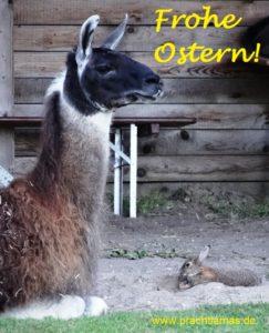 """Die Prachtlamas wünschen """"Frohe Ostern!"""" - Foto: Lama Hannibal hat Besuch vom Osterhasen"""