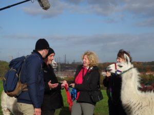 """Lamas machen """"Lust auf Wandern"""" im WDR-Fernsehen am 3 Advents-Sonntag mit Marco Schreyl, Torsten Sträter und Beate Pracht - und den Lamas Kasimir und Dancer"""