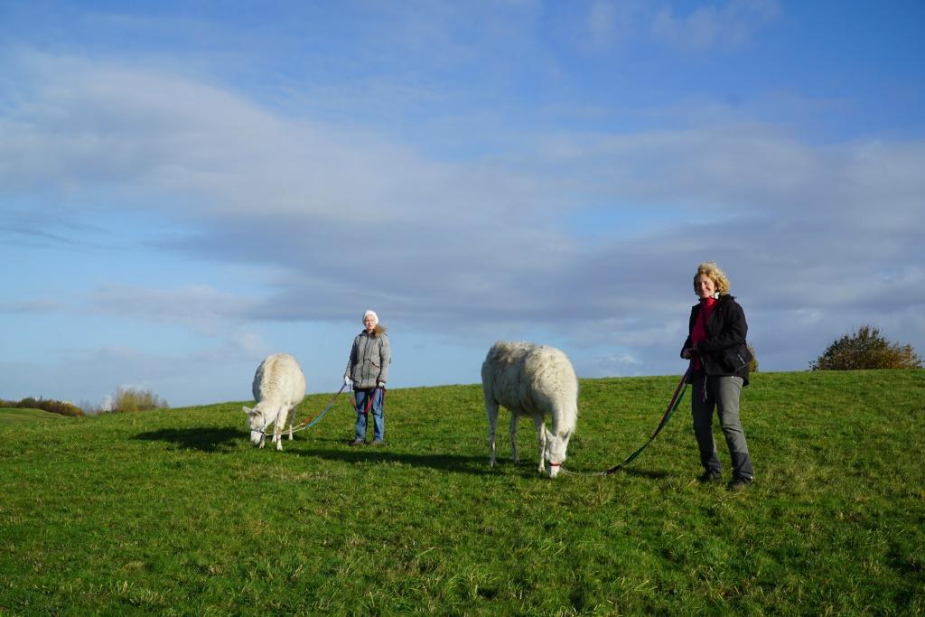 Große Lamawanderung im Park - Das neue Lama-Erlebnis mit viel Zeit im grünen Ruhrgebiet!