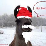Lama Caruso in Weihnachtsstimmung. Als
