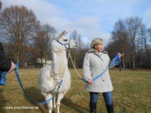 Mensch und Tier gemeinsam unterwegs beim Lamatrekking im Ruhrgebiet