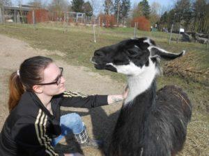 Lamas sind selbstbewusst mutig vertrauensvoll - das können Mädchen von Lamas lernen, Foto: Prachtlamas