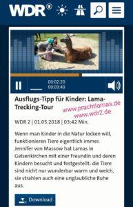 WDR 2 Radio Bericht mit Lama Caruso in Gelsenkirchen bei der Sendung für Familien mit Kindern Endlich Raus