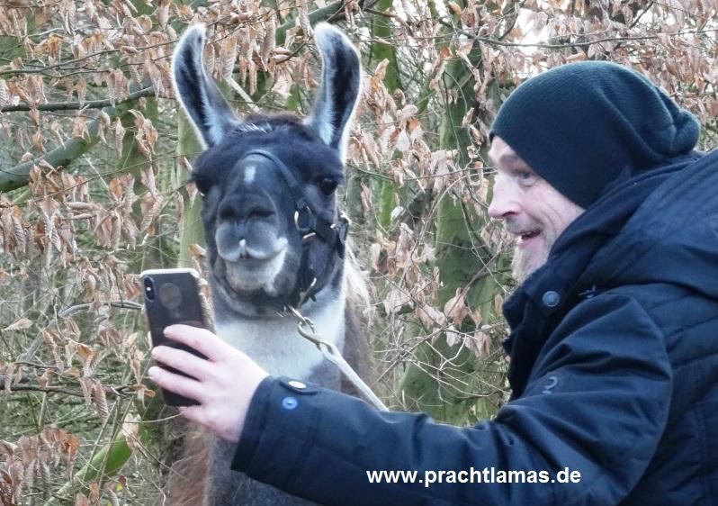 Selfietime - Torsten Sträter unterwegs mit den Prachtlamas in Gelsenkirchen für WDR Sträters Männerhaushalt Folge 18 - Ausstrahlung am 30.03.2019 um 21:45 Uhr. Foto: Beate Pracht