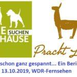 Bericht über die Prachtlamas bei Tiere suchen ein Zuhause, Sendung im WDR-Fernsehen am Sonntag, 13.10.2019