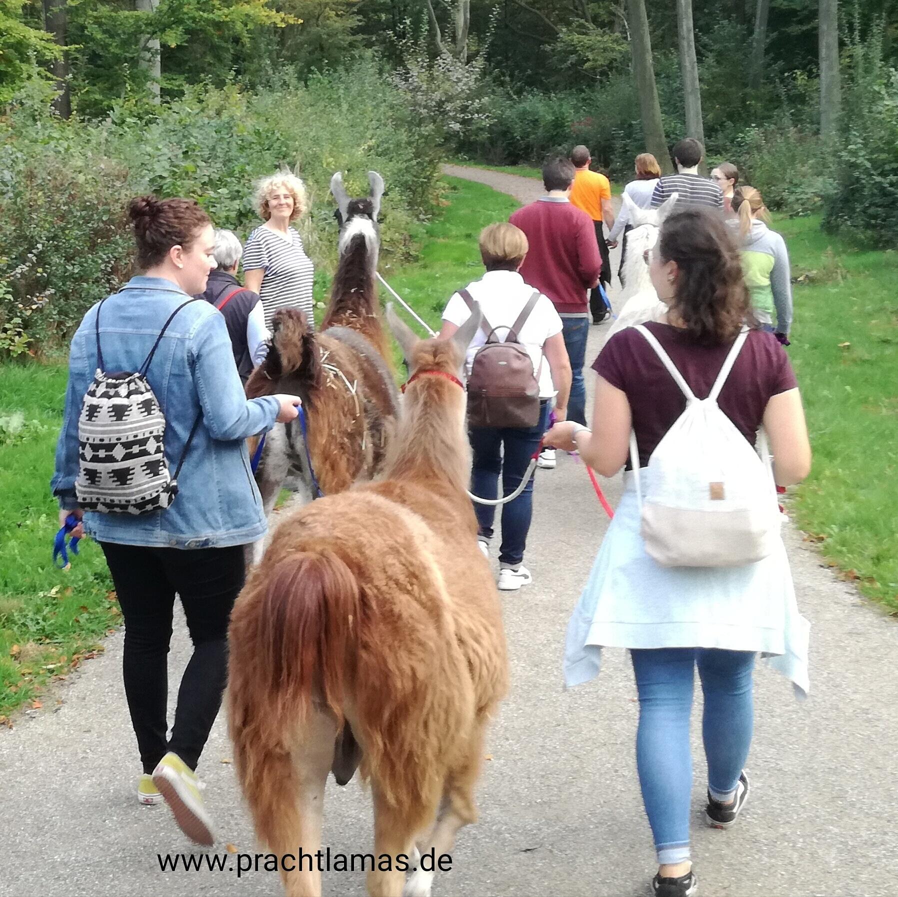 Lamawanderungen im Gesundheitspark Nienhausen Gelsenkirchen bei den Prachtlamas, Beate Pracht