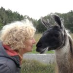 Achtsame Mensch-Tier-Begegnung mit Lama Hannibal, Prachtlamas NRW